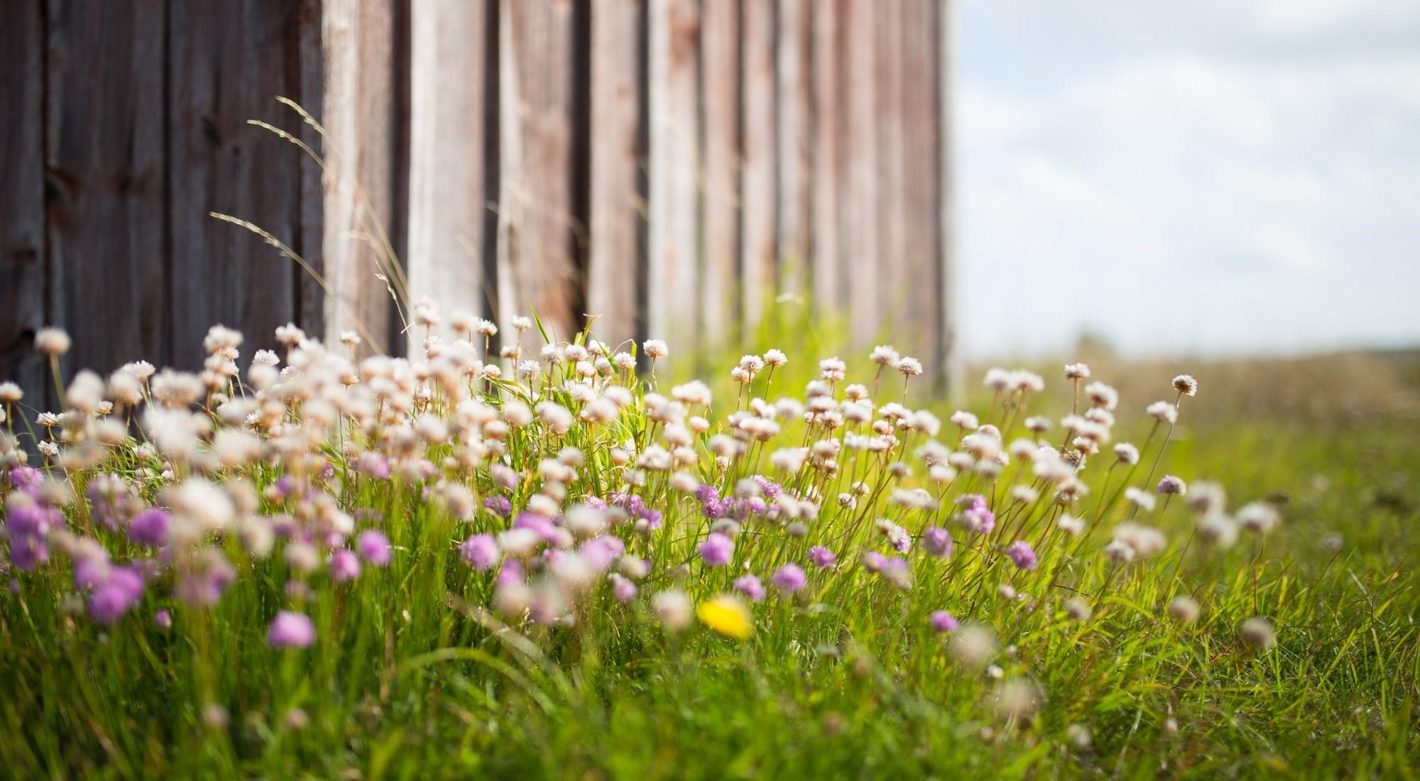 blommor stugvägg