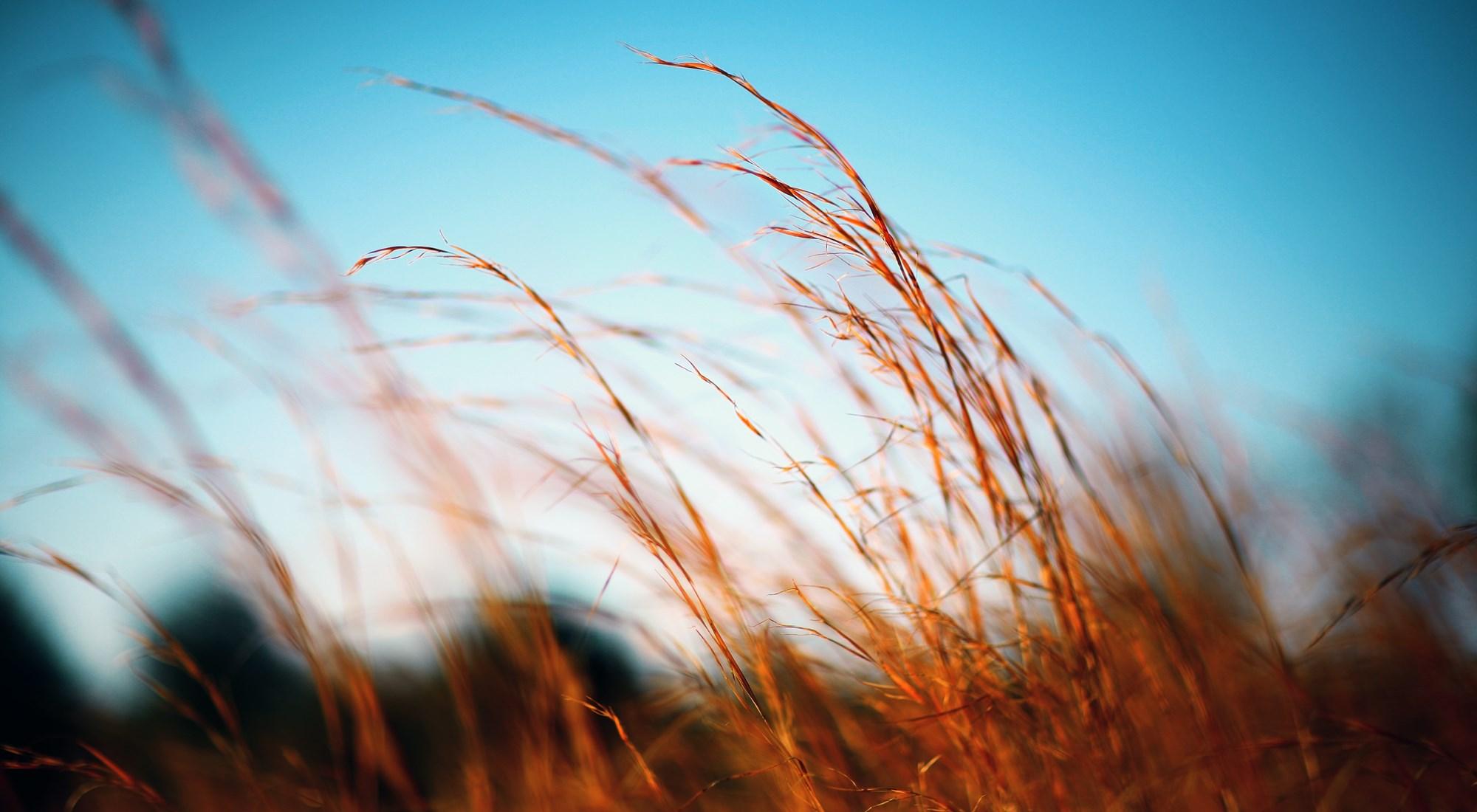 gräs himmel