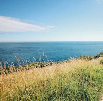 gräs hav