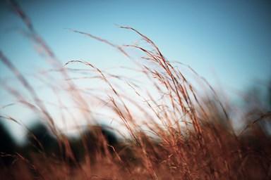 gräs himmel2